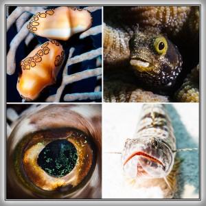 Curacao Tauchen Bilder von Unterwasser Fische