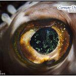 Kugelfisch beim tauchen Curacao Divers Deutsche Tauchschule Tauchen Tauchurlaub Urlaub entspannen Unterwasser Non Limit Freiheit selbstständig Karibik