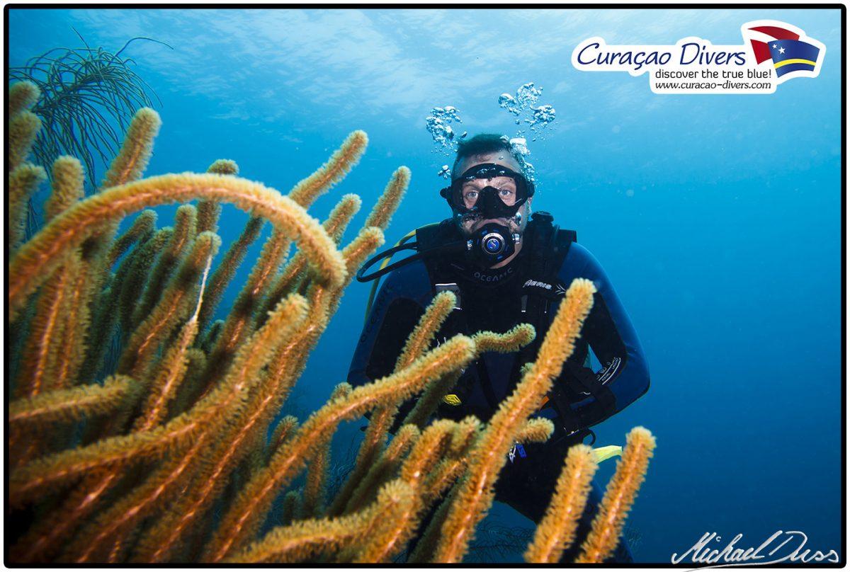Taucher beim tauchen Curacao Divers Deutsche Tauchschule Tauchen Tauchurlaub Urlaub entspannen Unterwasser
