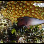 Curacao Divers Deutsche Tauchschule Tauchen Tauchurlaub Urlaub entspannen Unterwasser Non Limit Freiheit selbstständig Karibik