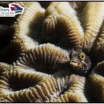 Tauchen Deutsche Tauchschule Tauchen Tauchurlaub Urlaub entspannen Unterwasser Non Limit Freiheit selbstständig Karibik Curacao Divers