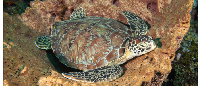 Curacao Tauchen