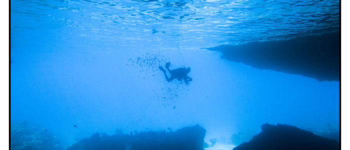 Curacao Tauchen bester Tauchplatz beste Tauchspots am Blue Room beim Mushroom forest zum Tauchen Tauchreiseführer Curacao
